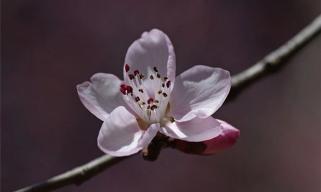 石家庄春季赏花指南!有这一篇就够了