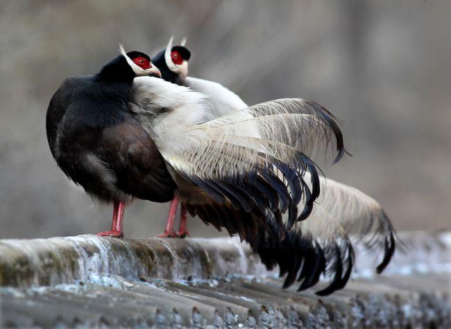 韩城褐马鸡国家级自然保护区