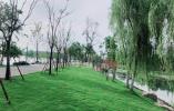 环湖路翠洲门至太平门段树种换新,更通透更多彩