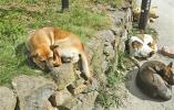 《宁波市养犬管理条例(草案)》近期将提交审议