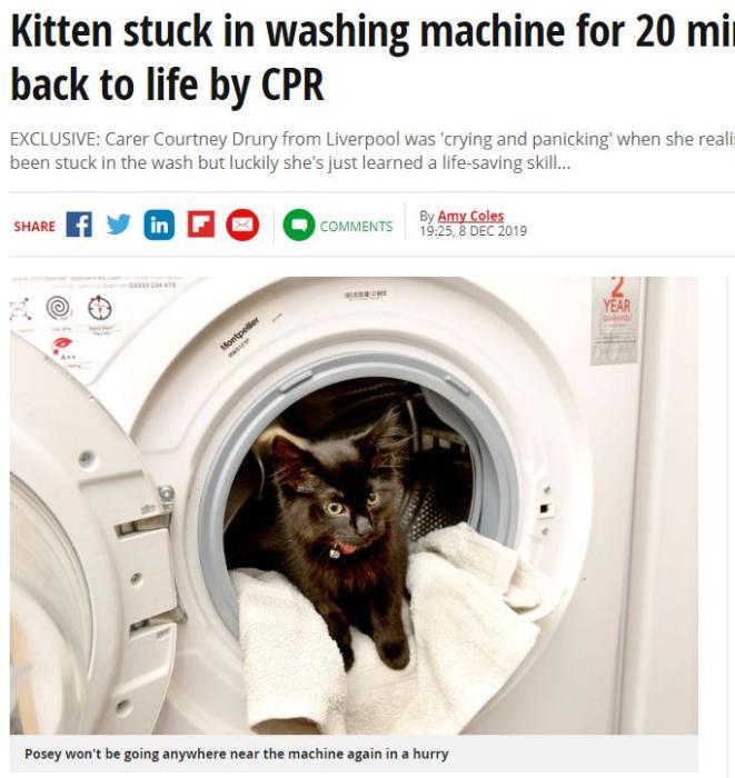 """还剩8条命?小猫在洗衣机里被""""洗""""20分钟幸存(图)"""