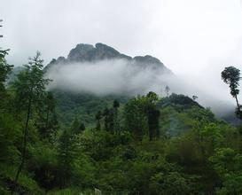 五峰土家族自治县