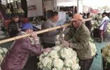 花椰菜上保险 农户收入有保障