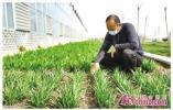 这就是山东|科技助力、金融赋能、人才支持,山东扎实推进农业稳产保供!