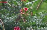麻雀还爱吃花花?谁让这种花浑身抹了蜜呢