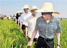袁隆平:第三代杂交稻将成发展方向,双季晚稻亩产超千公斤