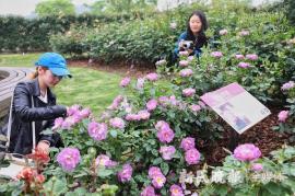 2019上海?#24405;?#23637;周五辰山植物园开幕