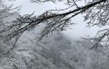 【蜂之眼】下雪了!下雪了!倒春寒注意添衣保暖