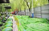 济南黑西路人行道升级改造,绿化带扩容