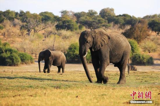惊魂一刻!斯里兰卡街头一大象失控 致至少18人伤
