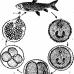 刺激隱核蟲