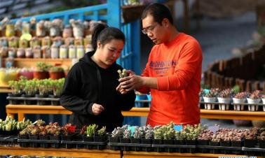Couple's succulent plant business yields benefits in China's Hebei
